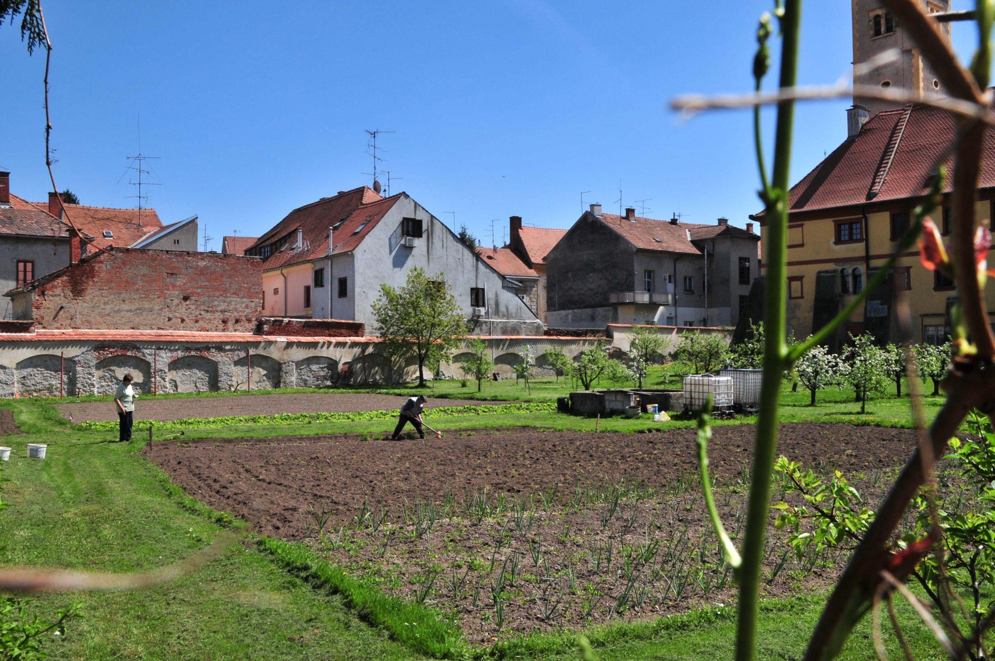 Gemüsegarten im Hinterhof des Ursulinenklosters von Varazdin.