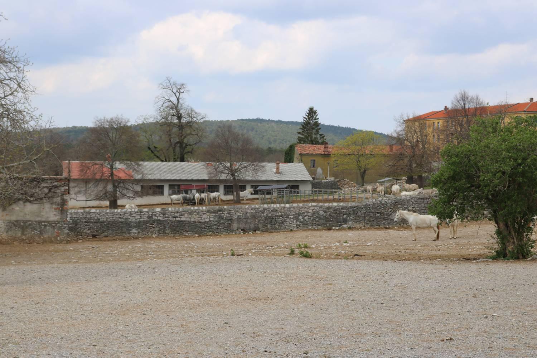 Die Außenanlagen von Lipica.
