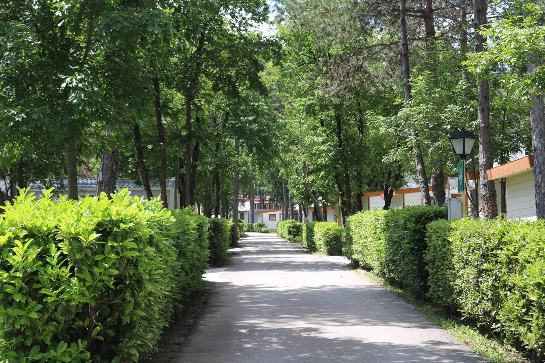 Die zahlreichen Bäume bieten auch im Hochsommer Schatten.