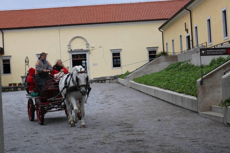 Auch die Kutschen werden von Lipizzanern gezogen.