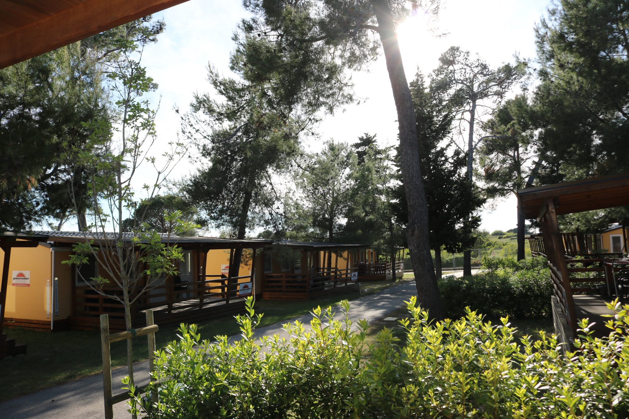 Unter schönen Pinienbäumen liegen die Mobilheime.